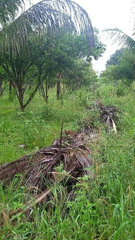 Vendo chácara na linha 11 20 km de cacoal - Foto 17