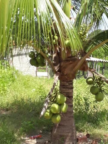Sítio com 2 hectares - Todo irrigado e produzindo - Foto 7