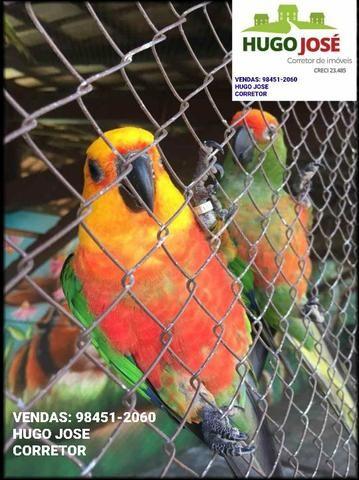 Chácaras em Trindade- Go Monte das Oliveiras / Arca Parque - Foto 11
