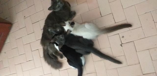 Doa-se 03 Gatinhos Urgente