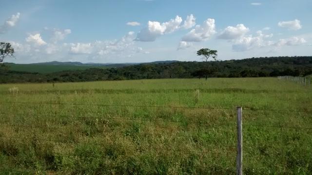 Fazenda de 4 alqueires para pecuária a venda na região de Caldas Novas GO - Foto 8