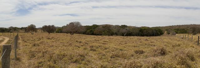 Fazenda 23 Alqueires, Formada, Plana, Terra Cultura, 1,2 Asfalto-Goiánésia - Foto 19