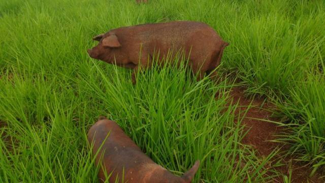 Vila rural em Valinhos , cidade Luiziana - Foto 7
