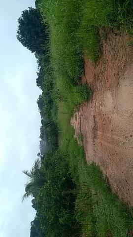 Vendo chácara na linha 11 20 km de cacoal - Foto 7
