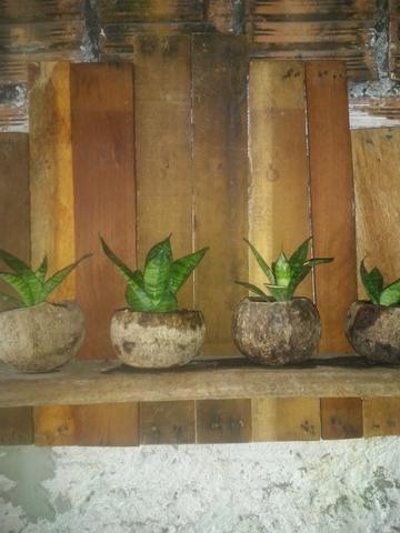 Suporte para plantas - Foto 6