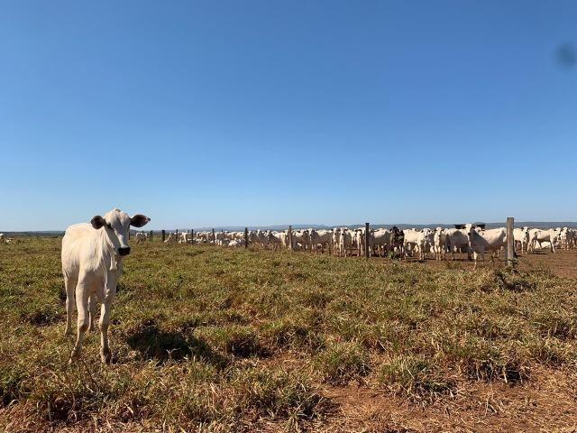 Fazenda no manso/ 700 hectares muito boa de água - Foto 9