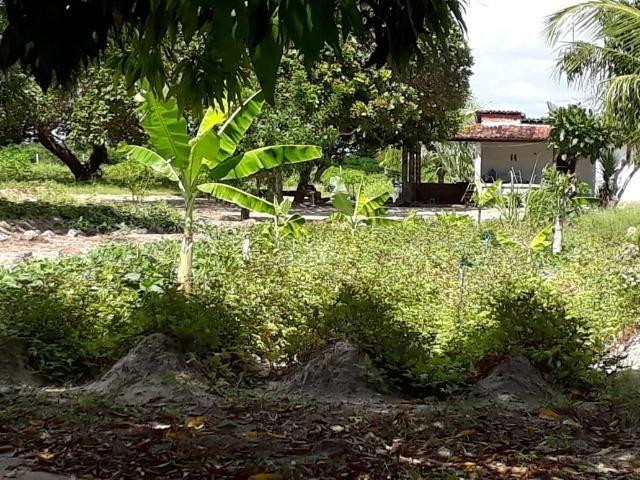 Sítio com 2 hectares - Todo irrigado e produzindo - Foto 9