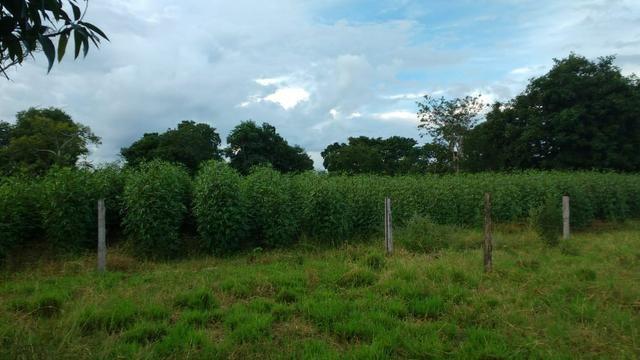 Fazenda 320 ha 100 km de Cuiaba - Foto 12