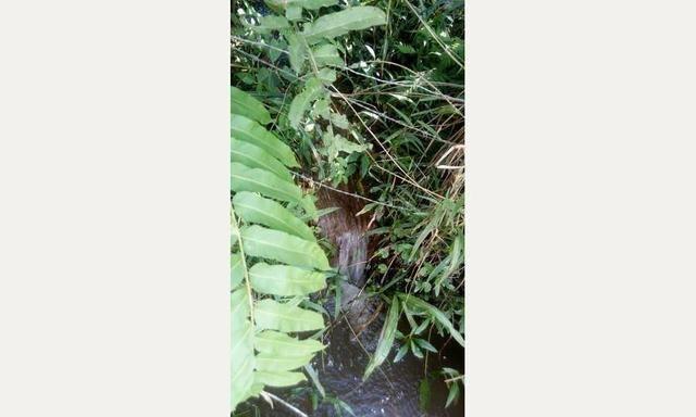 Linda fazendinha em Cachoeiras de Macacu medindo 242.000m2 oportunidade!!! - Foto 8