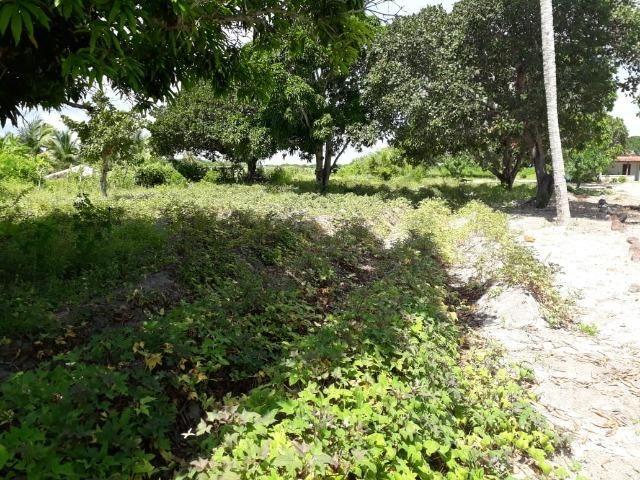 Sítio com 2 hectares - Todo irrigado e produzindo - Foto 19