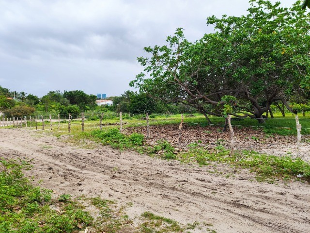 Lençóis Maranhenses - Lotes em Condomínio em Santo Amaro-MA - Foto 12