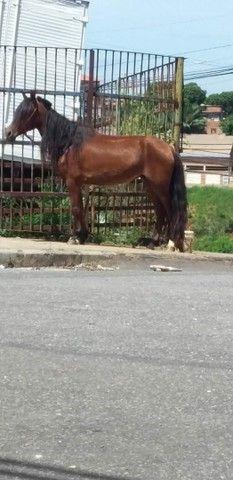 Égua, vendo barato! - Foto 3