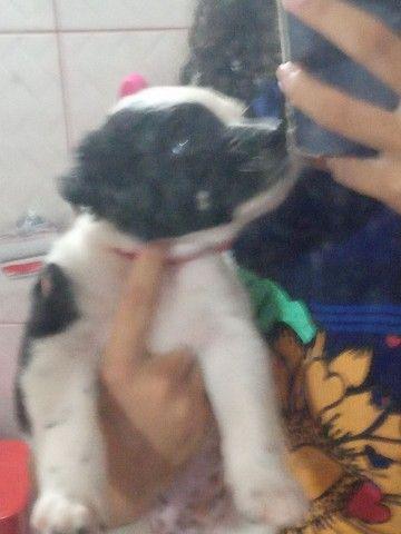Cachorro macho  - Foto 3