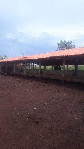 Fazenda dupla aptidão município Ituitataba  - Foto 14