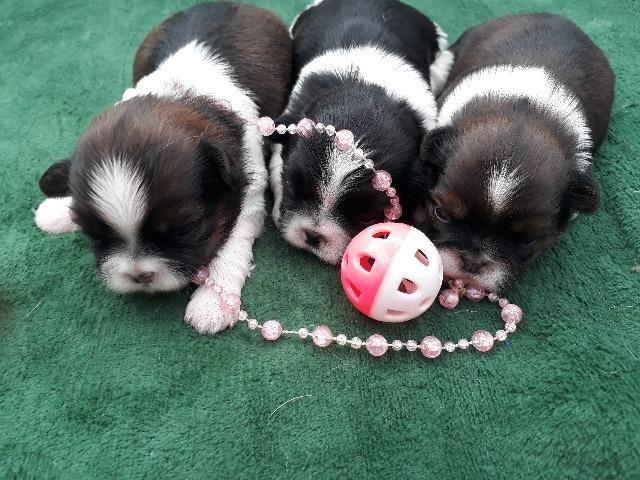 3 feminhas , princesinhas de procedência, porte pequenas