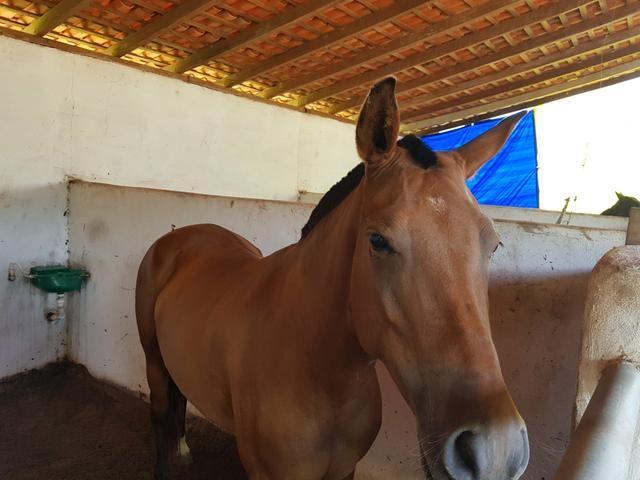 Aluguel de baias para cavalos. R$ 400,00/mês - Foto 2