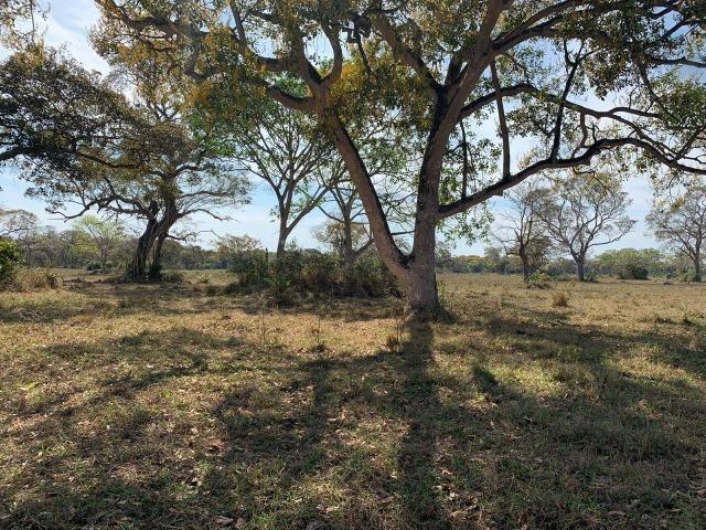 Fazenda formada em Poconé /MT com 1360 hectares - Foto 9