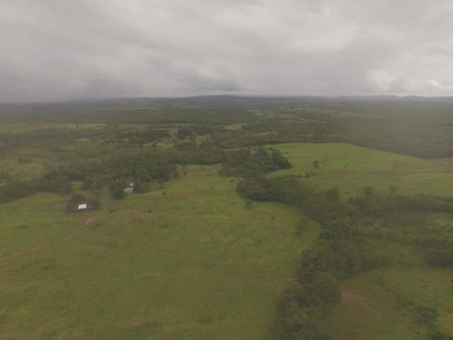 Fazenda no manso/ 700 hectares muito boa de água - Foto 4