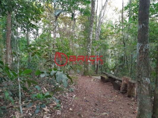 Ótimo terreno com 7390 m² no bom retiro. teresópolis- rj. - Foto 15