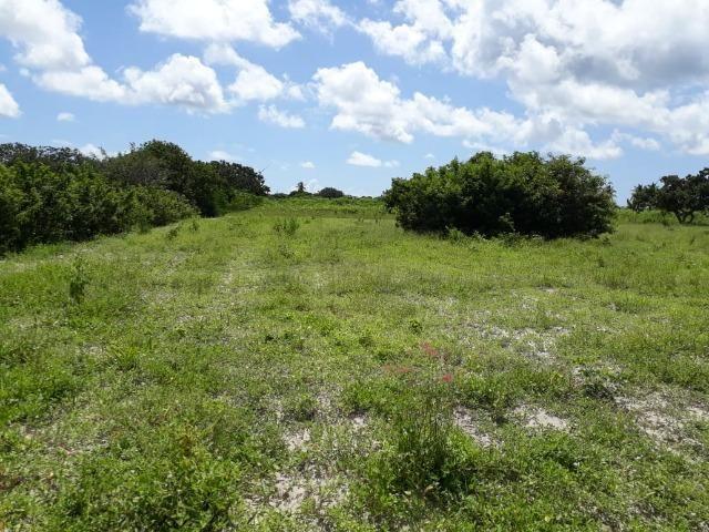 Sítio com 2 hectares - Todo irrigado e produzindo - Foto 17
