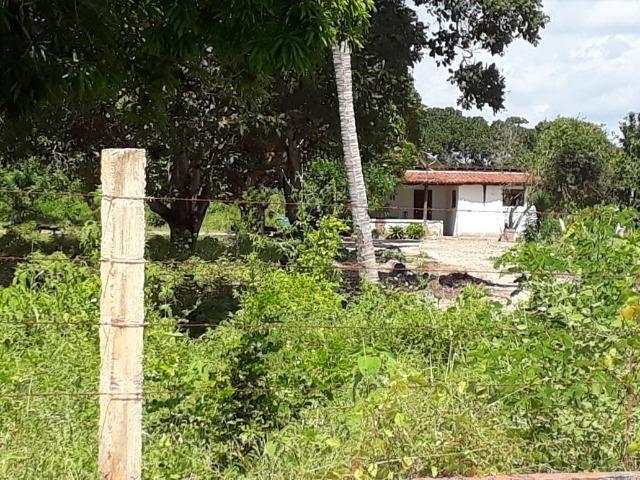 Sítio com 2 hectares - Todo irrigado e produzindo - Foto 6