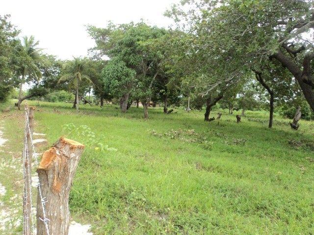 Terreno em Horizonte-Ce - Foto 13
