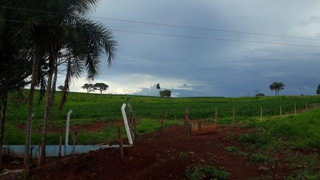 Fazenda dupla aptidão município Ituitataba  - Foto 7