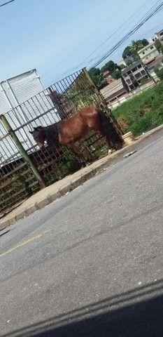 Égua, vendo barato!