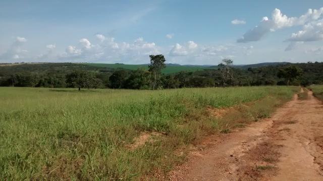 Fazenda de 4 alqueires para pecuária a venda na região de Caldas Novas GO - Foto 9