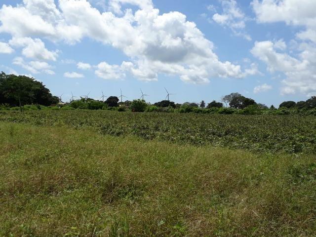 Sítio com 2 hectares - Todo irrigado e produzindo - Foto 10