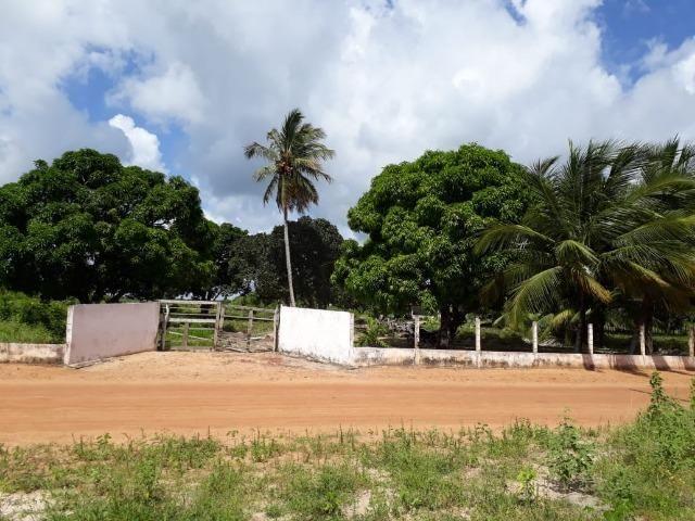 Sítio com 2 hectares - Todo irrigado e produzindo