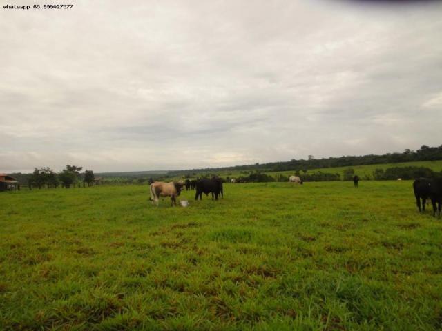 Fazenda para Venda em Pimenta Bueno, Pimenta Bueno - Foto 3