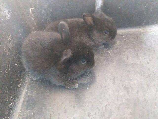 Filhotes de coelhinhos