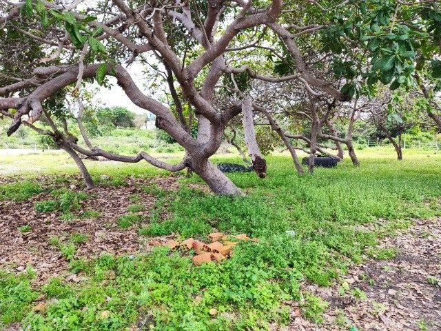 Lençóis Maranhenses - Lotes em Condomínio em Santo Amaro-MA - Foto 5