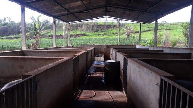 Fazenda dupla aptidão município Ituitataba  - Foto 5