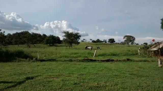 Fazenda de 4 alqueires para pecuária a venda na região de Caldas Novas GO - Foto 5