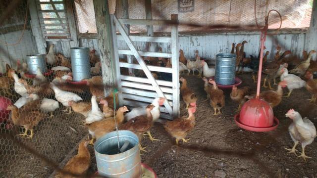 Vila rural em Valinhos , cidade Luiziana - Foto 2
