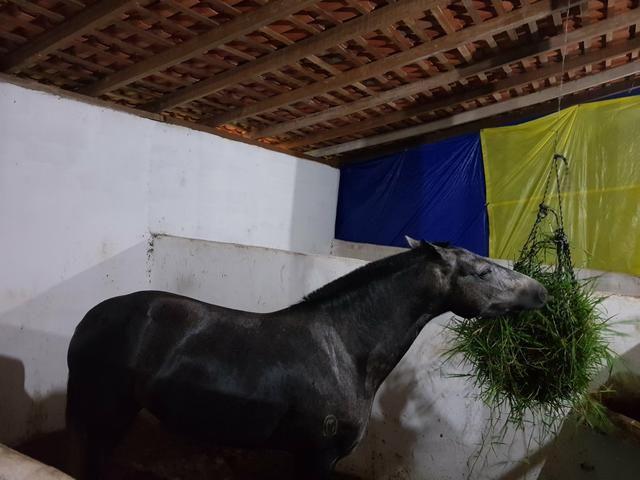 Aluguel de baias para cavalos. R$ 400,00/mês - Foto 3