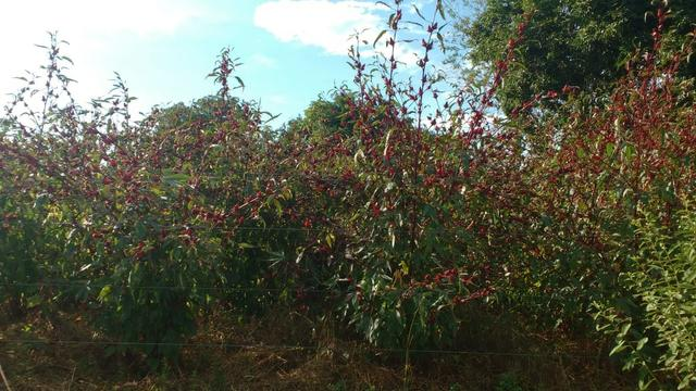 Fazenda 320 ha 100 km de Cuiaba - Foto 3