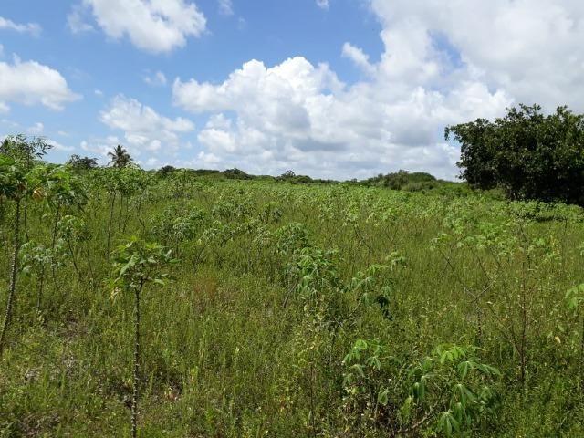 Sítio com 2 hectares - Todo irrigado e produzindo - Foto 15