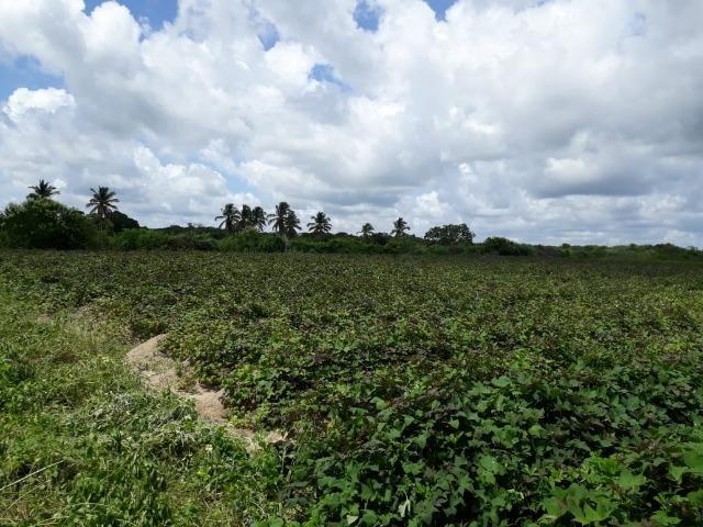 Sítio com 2 hectares - Todo irrigado e produzindo - Foto 12
