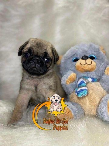 Belos Filhotes de Pug - Foto 2