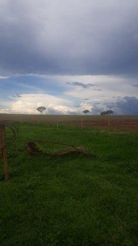 Fazenda dupla aptidão município Ituitataba  - Foto 13