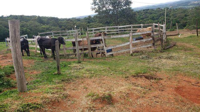 Vaca c/ cria,  - Foto 2