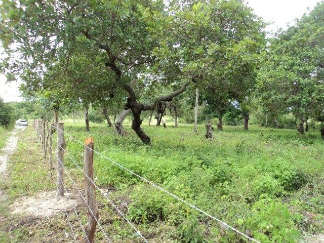 Terreno em Horizonte-Ce - Foto 5