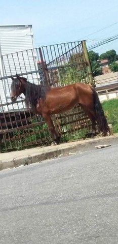 Égua, vendo barato! - Foto 2
