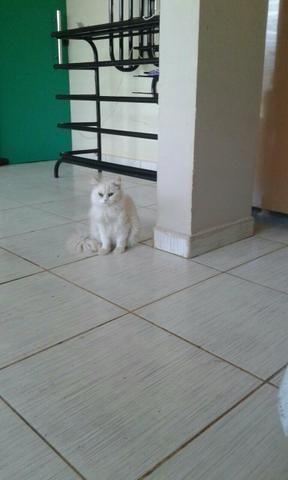 Vendo gata