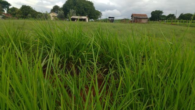 Vila rural em Valinhos , cidade Luiziana - Foto 3