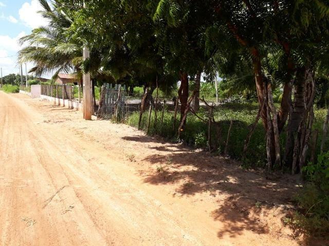 Sítio com 2 hectares - Todo irrigado e produzindo - Foto 4