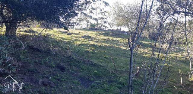 Chácara à venda com 3 dormitórios em Zona rural, Pinheiro machado cod:10115 - Foto 18